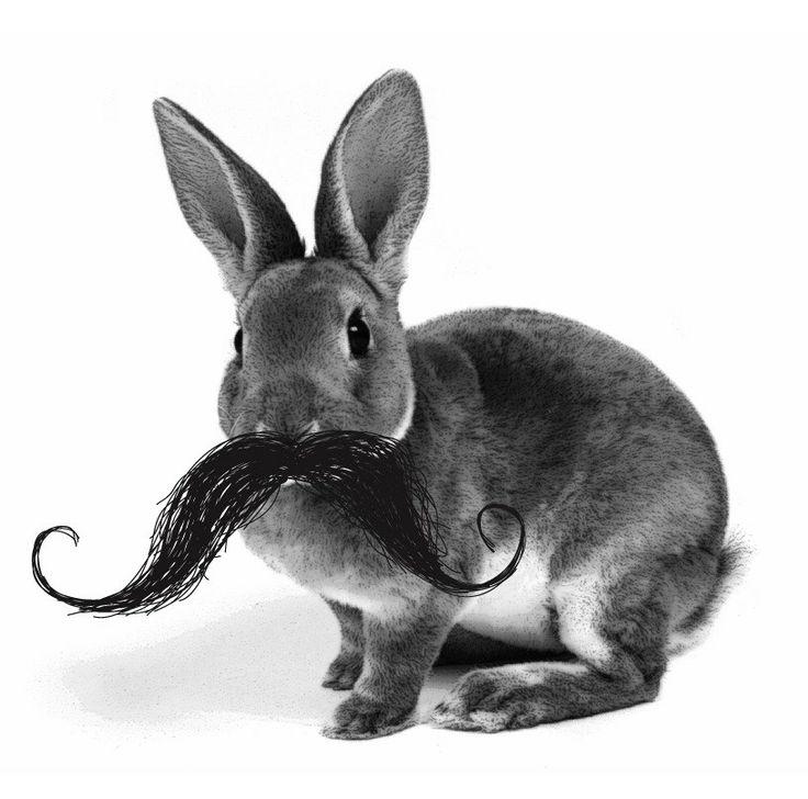 Oui Oui-movember-tipos de bigote-moustache-cosas con forma de bigote-conejo con bigote
